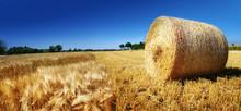 Getreide - Feld