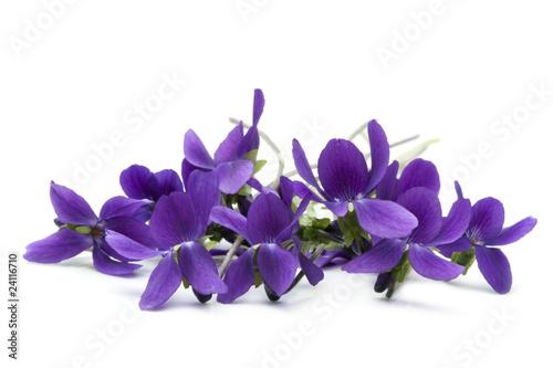 Cuadros en Lienzo Violets