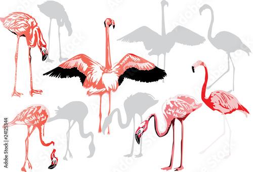 Canvas Prints Flamingo Bird pink flamingo collection on white