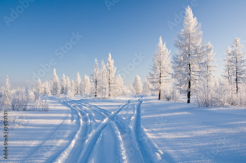 Fotografija  winter forest with road