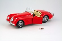 Spider Stepping Down From Car ...
