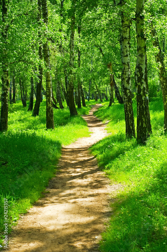 green forest #24215357