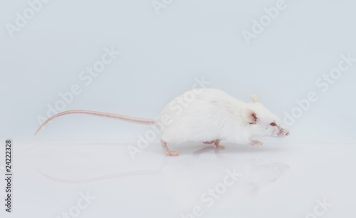 fa9c67d4707 maus mouse 20 - Buy this stock photo and explore similar images at ...