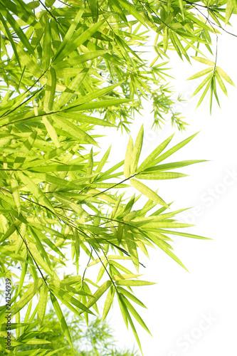 zielone-bambusowe-liscie
