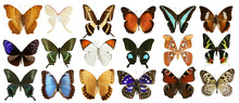 Butterflies Collection Colorfu...