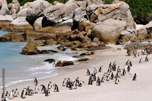 Poster Afrique du Sud Südafrika - Pinguin