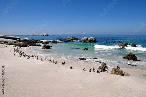 Foto op Plexiglas Zuid Afrika Südafrika - Pinguin