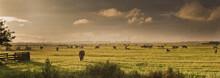 Panorama Of Dutch Landscape Wi...