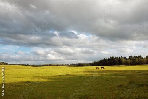 Foto op Plexiglas Weide, Moeras Scottish landscape with horses
