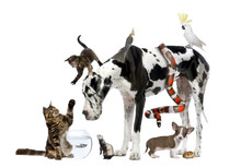 Group Of Pets Together In Front Of White Background