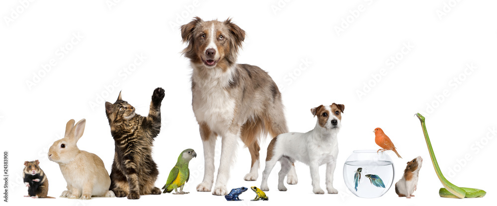 Fototapeta Group of pets together in front of white background