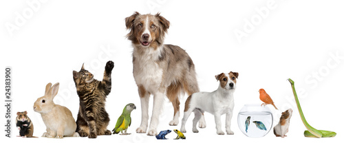 Obraz Group of pets together in front of white background - fototapety do salonu