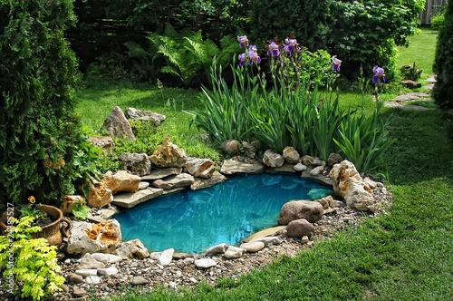 Fotografija small pond in the garden