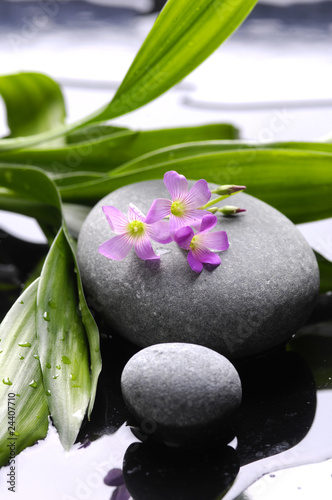 Keuken foto achterwand Spa atomatherapy still life, spa and wellness concept