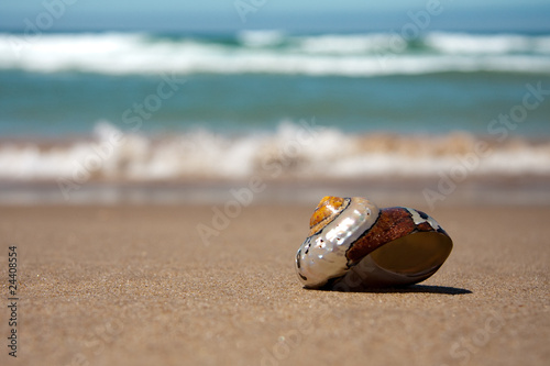 Fotografering  Sea shell on beach with waves