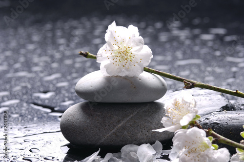 Fotobehang Spa Cherry with petals and stack of stones with water drops