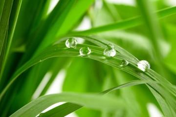 Panel Szklany Podświetlane Do łazienki water drops on the green grass