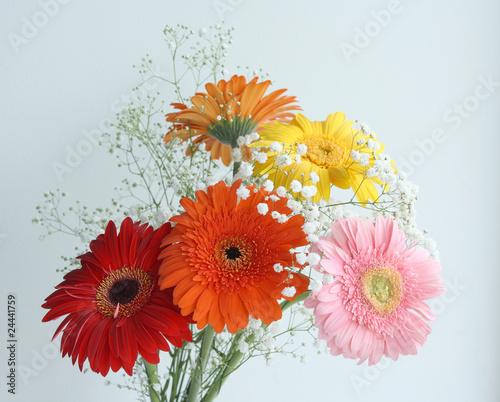 Fototapeta Gerbera flowers obraz na płótnie