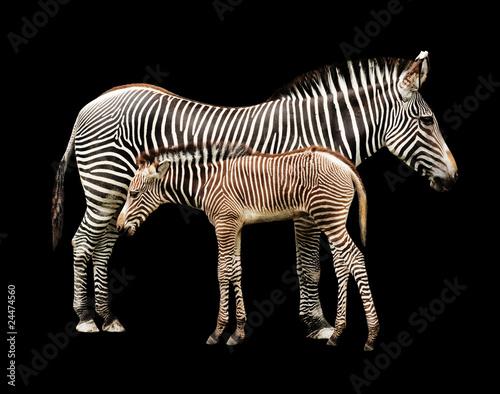 Aluminium Prints Zebra Zebras in Shadows
