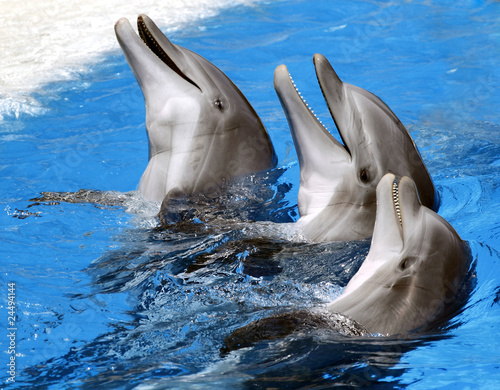 Photo Dolphins at Loro Parque, Spain, Tenerife