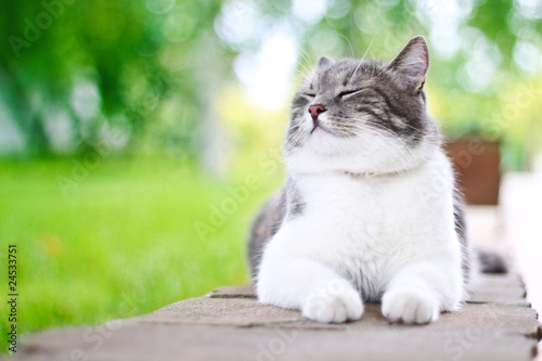 Cute cat enjoying himself outdoors.