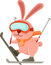 Skiing Rabbit
