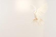 Flying White Dove Isolated On White