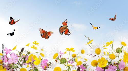 Plakat piękno natury