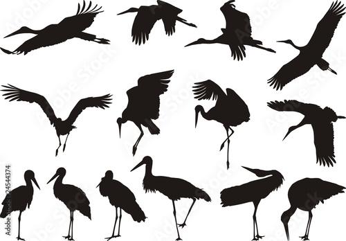 Carta da parati Stork silhouettes - vector
