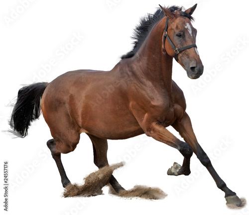Stickers pour porte Chevaux cheval