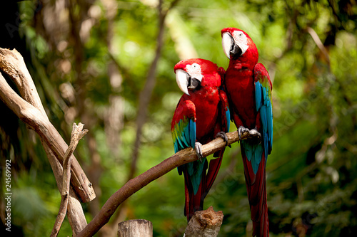 Colorful scarlet macaw perched on a branch Canvas Print