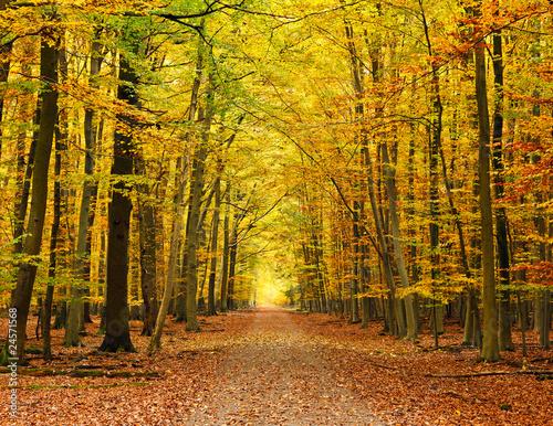Dekoracja na wymiar droga-w-lesie-jesienia