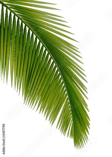 zielona-palma