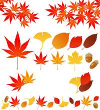 秋 広告 アイコン