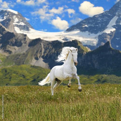 Naklejki konie   bialy-kon-biegnie-galopem-w-walley