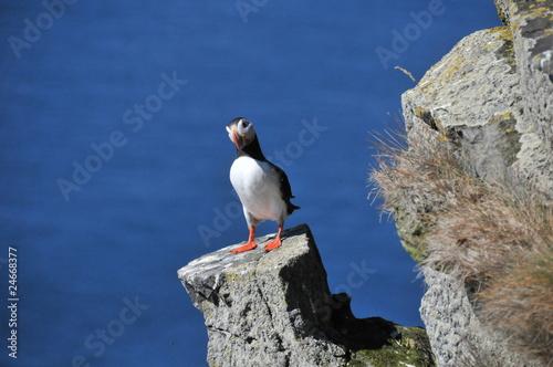 Fotografie, Obraz  island
