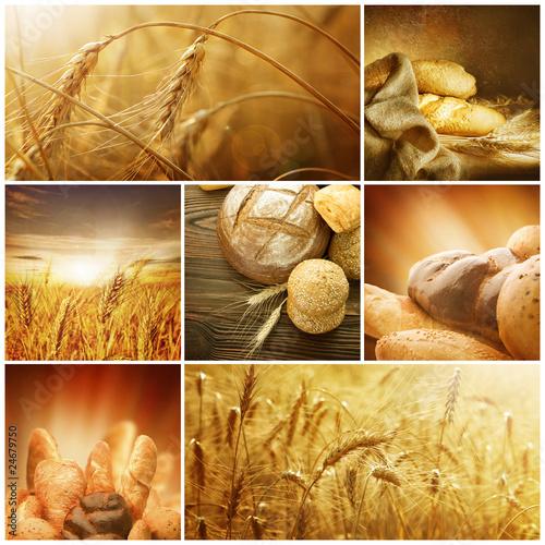 Fotografie, Obraz  Wheat Collage.Harvest concepts