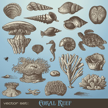 Vector Set: Coral Reef - Varie...