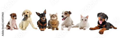 jeunes chiens et chats © cynoclub