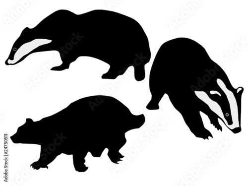 Fototapeta silhouettes of badgers