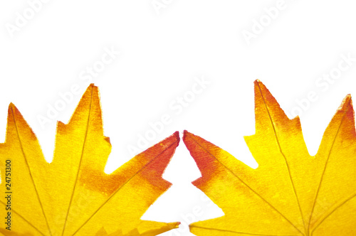 Fotografie, Obraz  Vibrant Fall Leaf Background