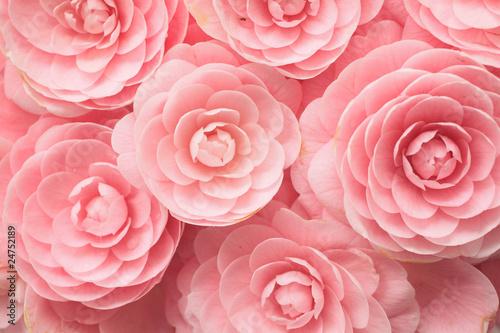 Canvas Print Camellia