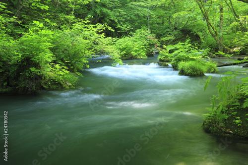 Keuken foto achterwand Watervallen water spring in forest