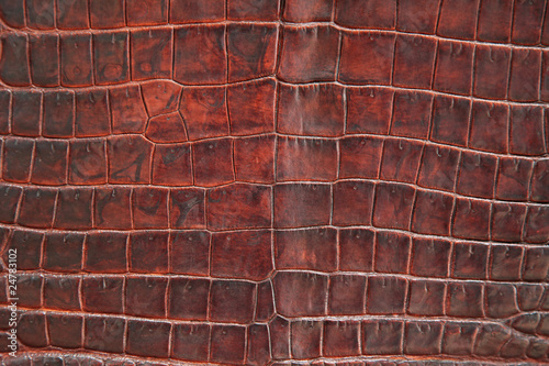 Canvas Prints Crocodile Krokodil Leder Textur