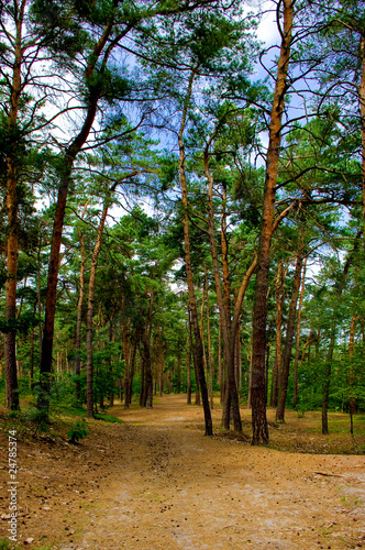 Tuinposter Weg in bos Summer afternoon in a forest, forest road