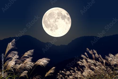 Obraz ススキと満月 - fototapety do salonu