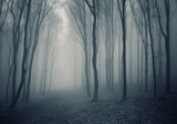 elegant forest with fog - 24830766