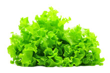 Bunch Of Green Salad Isolated Over White