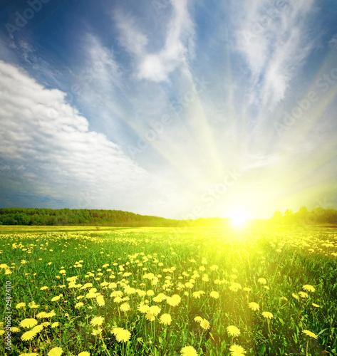 Staande foto Paardebloemen en water field of grass with dandelion in sunset