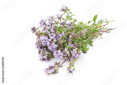 Fotografía  Herbal medicine:Thyme (Thymus serpillum)